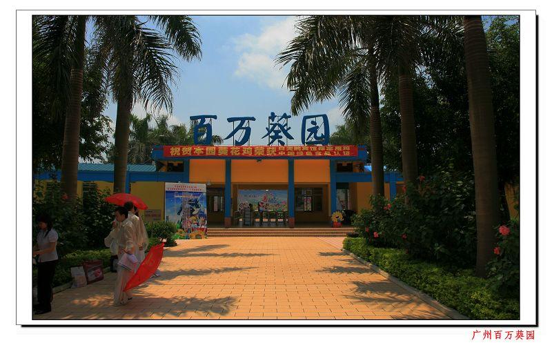 广州南沙百万葵园